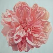 Englische Rose