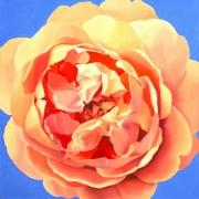 Gelbe Rose II