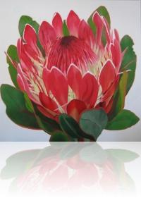 Protea im Weingut Constantia, Kapstadt
